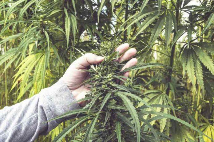 Productos para el Cultivo - Productos para el Cultivo de Marihuana