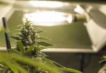 Luz Crecimiento Plantas Marihuana - Luz Plantas Marihuana