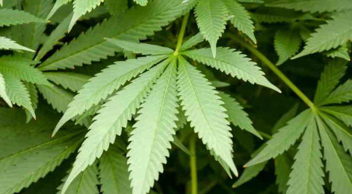 Plantas Medicinales - Plantas Curativas