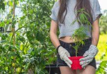 Trabajos Marihuana - Trabajos Relacionados con la Marihuana