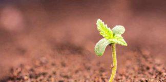 La Mejor Tierra para la Marihuana - Comprar Tierra para Marihuana