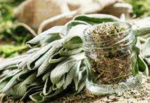 Beneficios de las Plantas Medicinales Salvia y Acedera