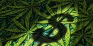 Legalización de la Marihuana - Trabajos Relacionados Marihuana