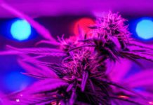 Luces Cultivo de Interior - Bombillas Cultivo de Interior