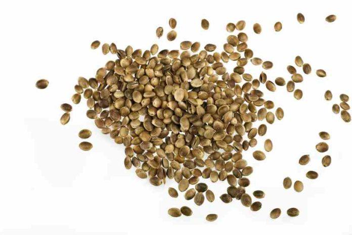 Semillas de Cáñamo - Beneficios de las Semillas de Cáñamo