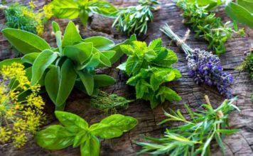 Plantas Medicinales - Plantas Medicinales como Antibióticos Naturales