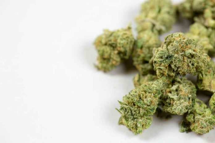 Curado de la Marihuana - Curado de Cogollos de Marihuana