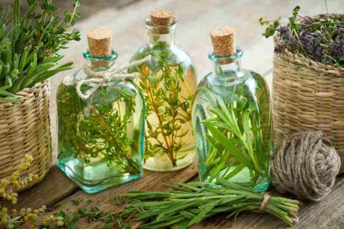 Plantas Medicinales - Plantas Curativas de Enfermedades