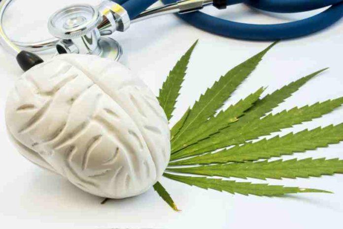 Marihuana buena para Cerebro - Marihuana mejora Función Cerebral