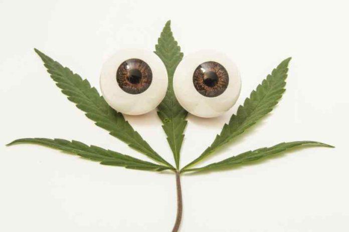 Pérdida de Visión Marihuana - Marihuana Pérdida de Visión