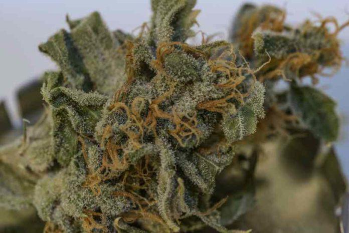 Marihuana y la Depresión - Depresión Afrontarla con Marihuana