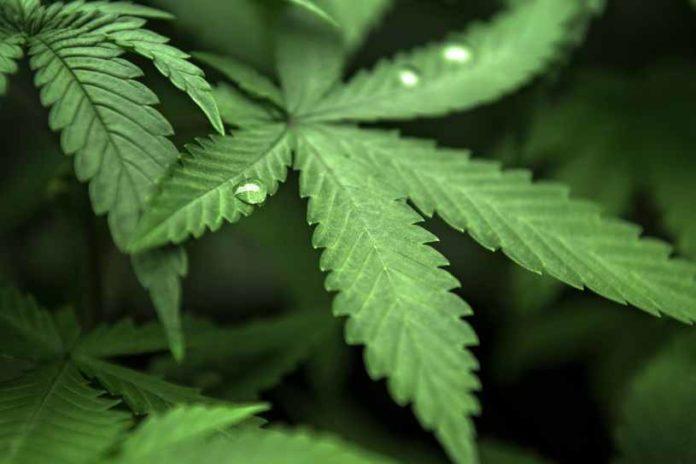 Consumo de Marihuana - Consumo Marihuana y Alcohol