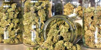 California Marihuana Recreativa - Marihuana Recreativa mayor Estado