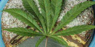 Cómo hacer un Bizcocho de Chocolate con Marihuana - Bizcocho de Marihuana