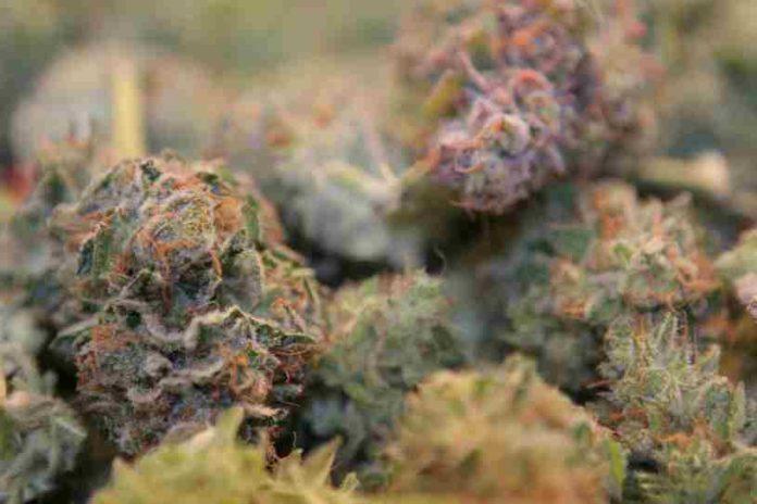 Marihuana Entrada de Otras Drogas - Marihuana Entrada de Otras Sustancias