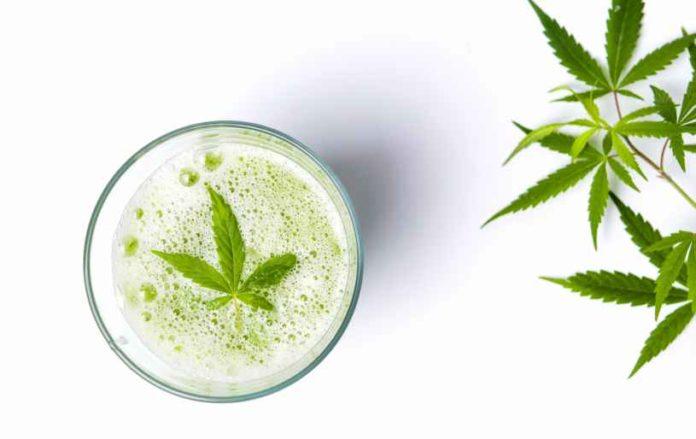 Cómo hacer Leche de Marihuana - Cómo podemos hacer Leche de Marihuana