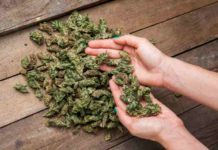 Marihuana Recreativa - Marihuana Medicinal Diferencias
