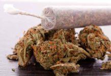 Marihuana Dopamina - Consumo de Marihuana mayor Dopamina