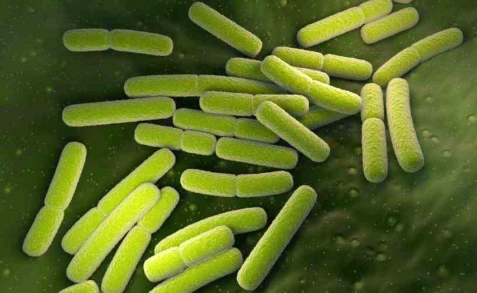 Hongos Buenos para la Marihuana - Bacterias Buenas para la Marihuana
