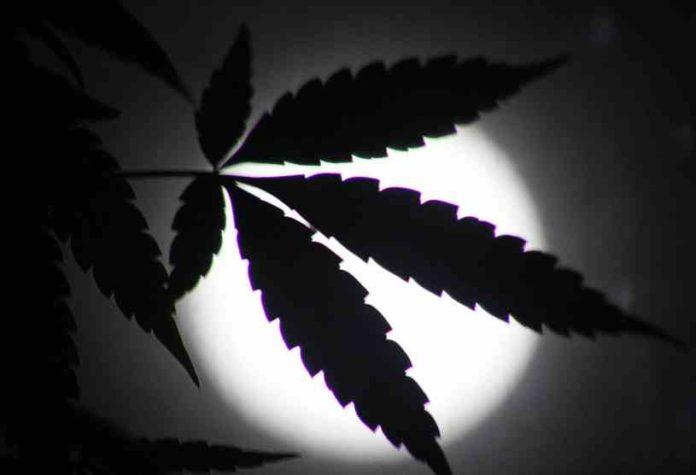 Luna en el Cultivo de Marihuana - Efectos de la Luna en el Cultivo de Marihuana