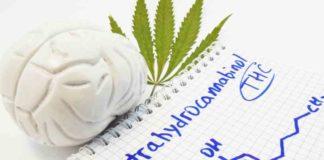 Beneficios Marihuana en el Cerebro - Bondades Marihuana al Cerebro