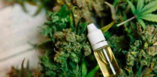 Marihuana Reduce las Convulsiones Epilépticas - Marihuana y La Epilepsia