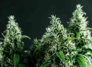 Tips de Marihuana - Consejos para Ahorrar en Marihuana