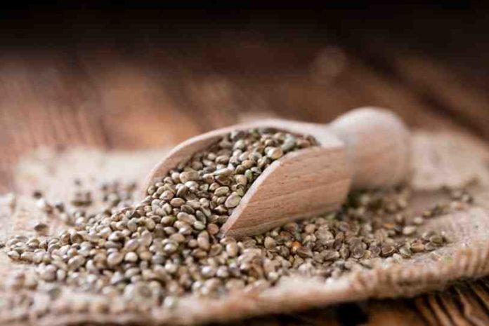 Semillas de Cáñamo en la Cocina - Semillas de Cáñamo para Cocinar
