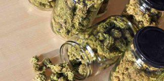 Marihuana Alivia la Fibromialgia - Fibromialgia y la Marihuana