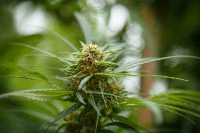 Fumar Marihuana antes de Ir al Trabajo - Marihuana para Trabajar