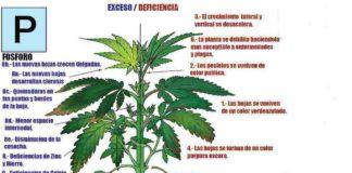 Fósforo en la Marihuana - Cómo Actúa el Fósforo en la Marihuana