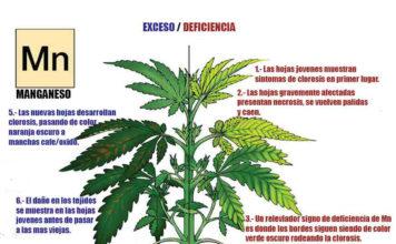 Manganeso Cultivo Marihuana - Qué es el Manganeso en la Planta de Marihuana