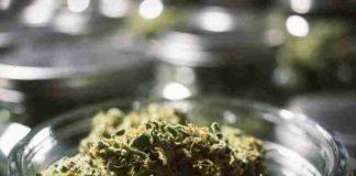 Cómo Conservar Cogollos Marihuana - Cómo hay que Conservar los Cogollos