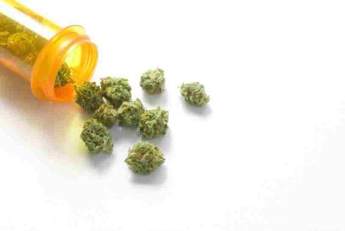 Legalización de la Marihuana Medicinal y el Autocultivo de Marihuana