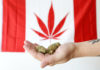 Marihuana Recreativa Legal en Canadá a partir del 17 Octubre de 2018