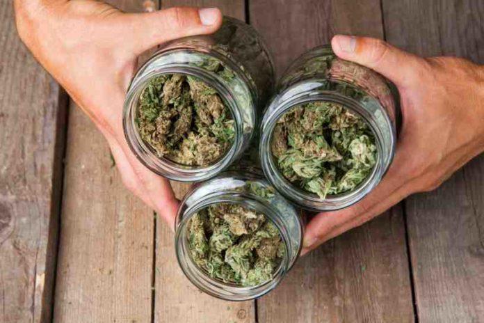 ¿Cómo hacer el Secado, Curado y Almacenamiento de la Cosecha de Marihuana?