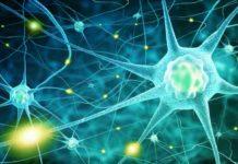Qué es el Sistema Endocannabinoide - Cómo Funciona el Sistema Endocannabinoide