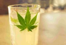 Mezclar Marihuana con Alcohol - ¿Qué ocurre Marihuana con Alcohol?