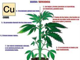 Carencia de Cobre en la Marihuana - Cómo Actúa el Cobre en las Plantas de Marihuana