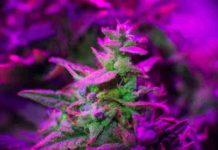 ¿Qué es el THC? - ¿Qué hay que saber del THC?