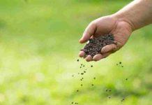 Utilizar Fertilizantes Orgánicos de Crecimiento - Fertilizantes Orgánicos