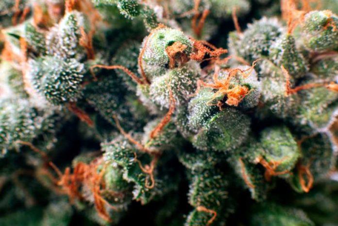 Marihuana Ganas de Reír - Marihuana Provoca Risas