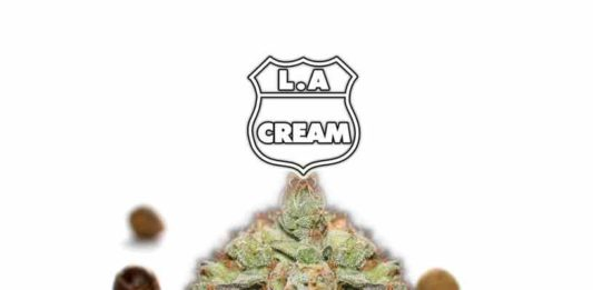 La Semilla de Marihuana L.A. Cream - Semillas de Marihuana Nine Miles Seeds