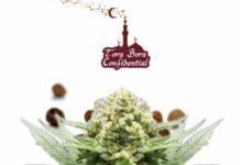 Semilla de Marihuana Tora Bora Confidential - Semillas de marihuanas Tora Bora Confidential