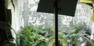 Cultivo de Interior - Cómo Cultivar Marihuana en Interior
