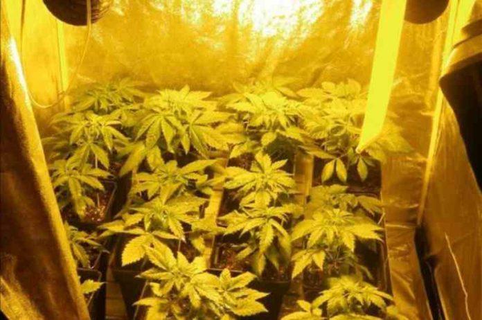 Ventilación en el Armario de Cultivo - Ventilación Plantas Marihuana