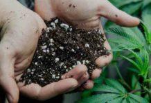Vermiculita Comprar - Vermiculita que es - Vermiculita Sustrato