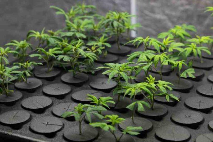 Control Vapor Agua Marihuana - Control Vapor Agua Cultivo Marihuana