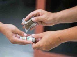 Comprar Marihuana - Elegir Marihuana para Consumir