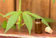 Marihuana Medicinal - Marihuana Medicinal Epilepsia
